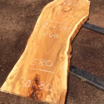 3086 Spotted Gum