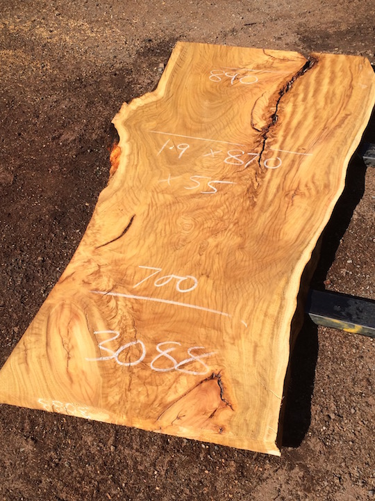 3088 Spotted Gum